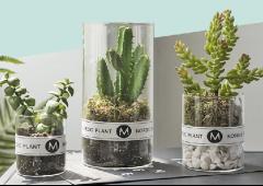 绿植盆栽植物