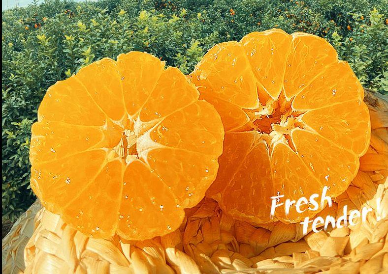 水果橘子详情页