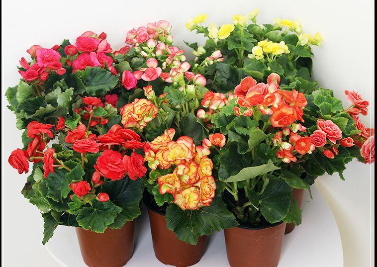 绿植花卉盆栽植物详情页